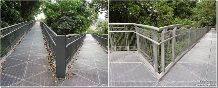 新加坡花柏山 (110)