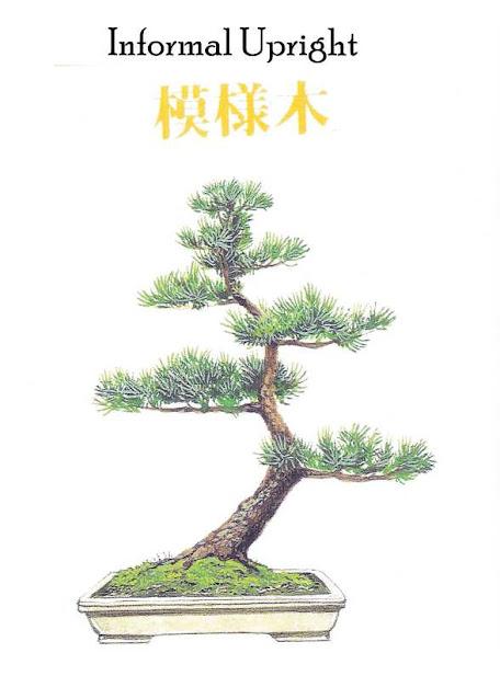 Image of MOYOGI – Informal Upright Bonsai Style