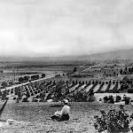 Hollywood area c 1905