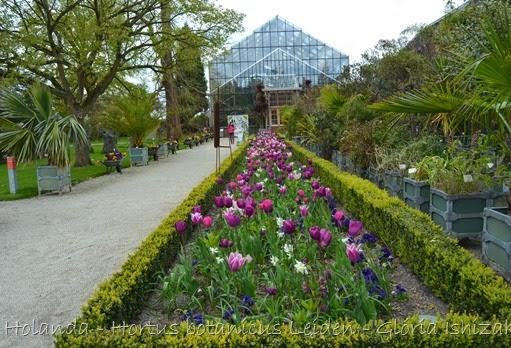 Glória Ishizaka - Hortus Botanicus Leiden - 7