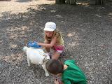Bryan watching Hannah brush a goat at the Nashville Zoo 09032011b