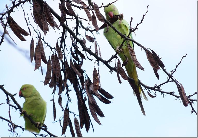 paris parrots111815 00002