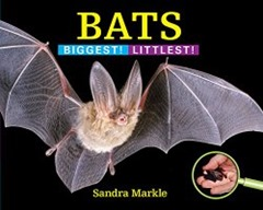 Bats Biggest Littlest