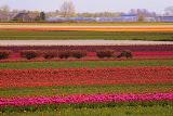Keukenhof, Lisse, Netherlands