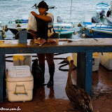 Mercado de peixes - Puerto Ayora, Santa Cruz - Galápagos, Equador