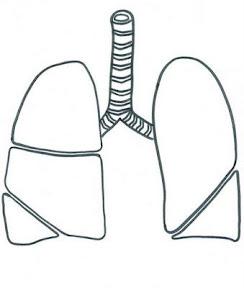 pulmones.jpg