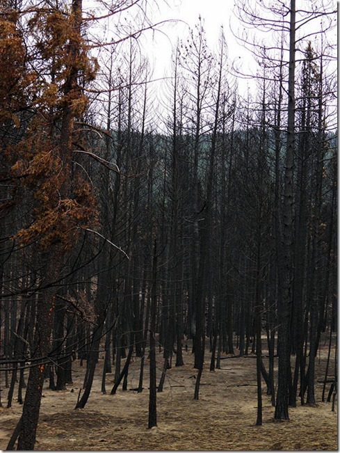 Rock-Creek-Fire-2015-5