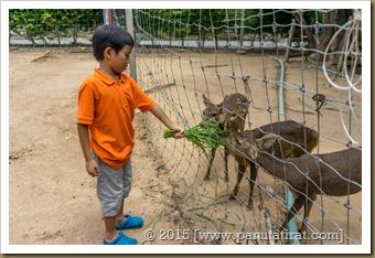 Pattaya 0815-01864