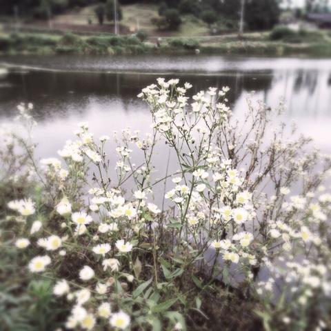 blogger-image--1437984717
