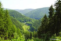 Svahy nad údolím Ohře jsou zarostlé přirozenými květnatými bučinami, které se zachovaly od dob hospodaření rodu Buquoyů. Na území je zastoupena řada vzácných a chráněných druhů flóry a fauny. Nalezneme zde např. prstnatec bezový, vstavač mužský aj., z fauny např. užovku stromovou, čápa černého či mloka skvrnitého.
