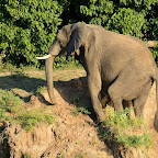 Bootssafari Mana Pools Nationalpark, Elefant am Ufer © Foto: Ulrike Pârvu | Outback Africa Erlebnisreisen
