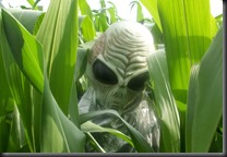 I always knew the Corn was the perfect hiding place for these green men.