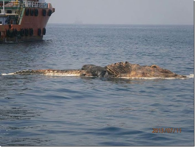 extraña criatura golfo persico 1