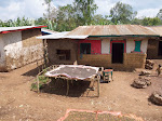 Drying coffee in front of an Ethiopian house