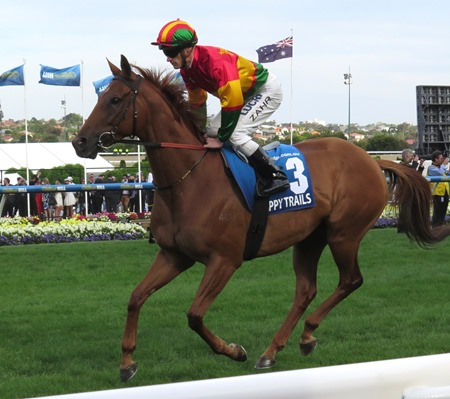 cox plate_happy trails 1
