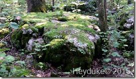Cedars of Lebanon SP TN 920