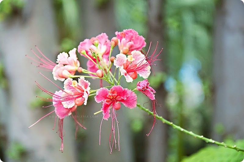 Flower-cluster-(1)