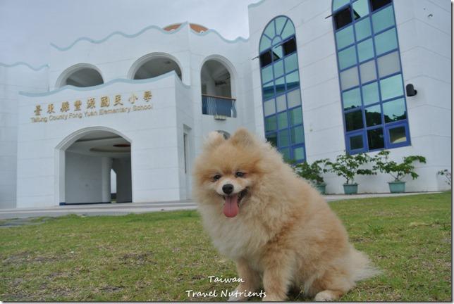 台東豐源國小 (5)