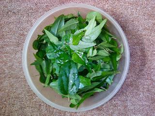 bahan pembuatan cincau hijau