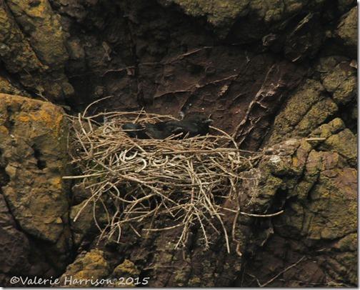 33-ravens-nest