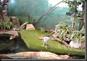 The  Crested Night Heron