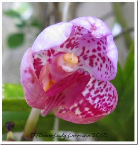 05-07-eva-orchid