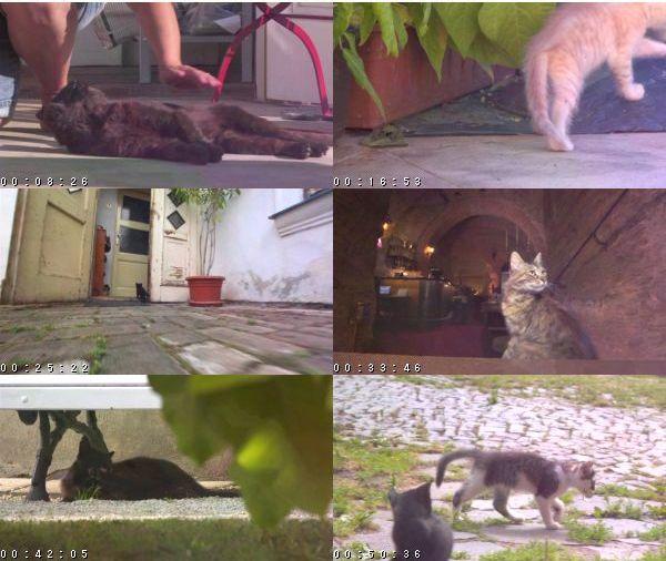 [TV-Variety] 岩合光昭の世界ネコ歩き「プラハ」 – 2016.01.30