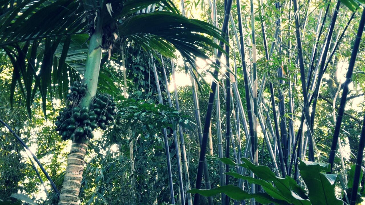 Jardin botanique de cairns sangoten en australie for Jardin botanique lanternes 2015