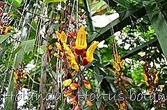Glória Ishizaka - Hortus Botanicus Leiden - 69