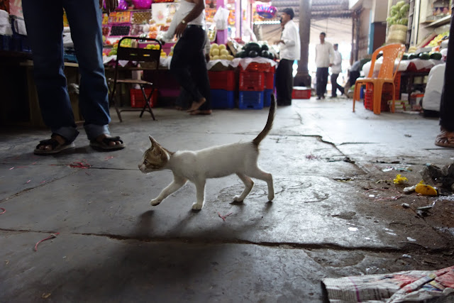 A kitten roaming the market.