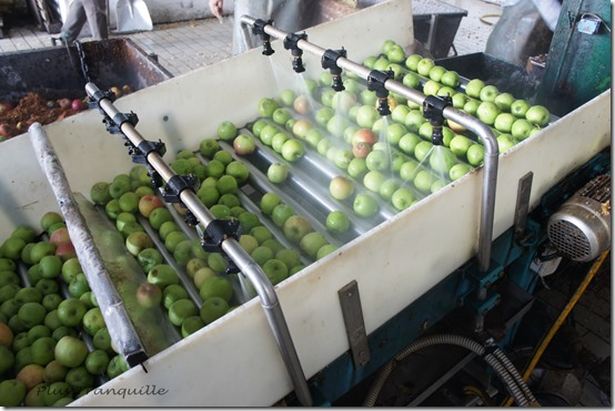 Apple Pressing 6