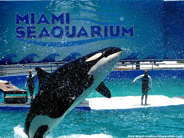 lolita-orca-miami.JPG