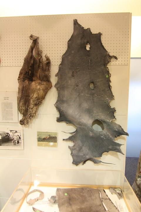 Falologické múzeum, Reykjavik