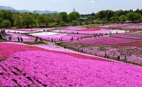 parque-hitsujiyama-japao