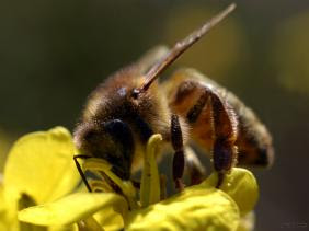 Crème dermique : le venin d'abeille et le caviar viennent doper l'esthétique et thérapies dermiques