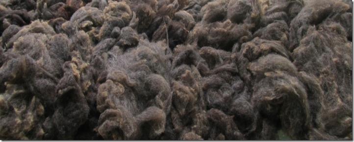 Wolle gewaschen 1