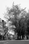 L'arbre de la Rue de Paris