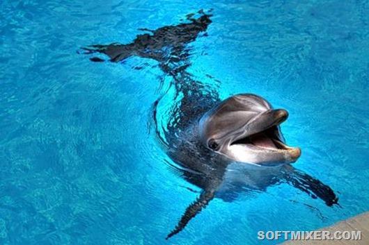 Udivitelnye-delfiny