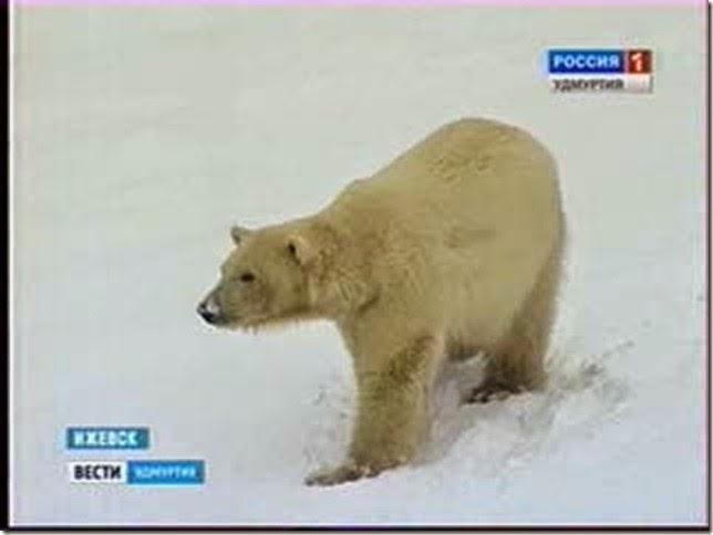 aurorachegaIzhevsk