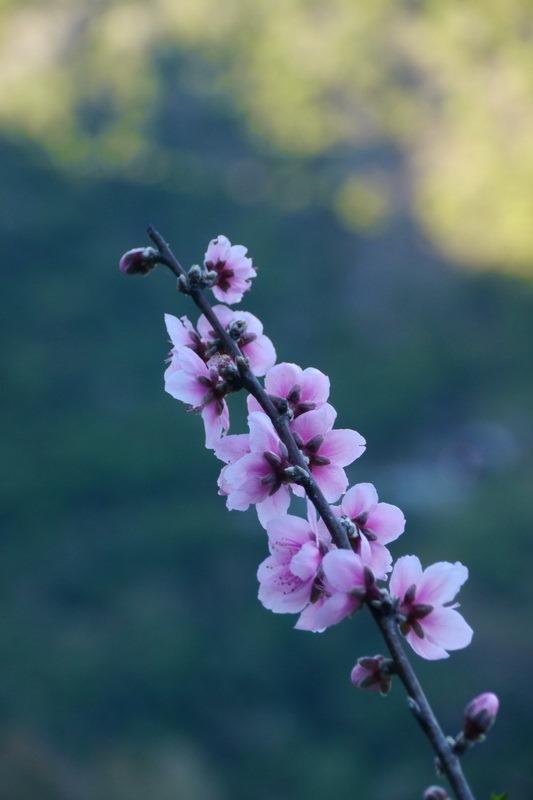 2014_0201-0207 轆轆溫泉 花東3日行_015