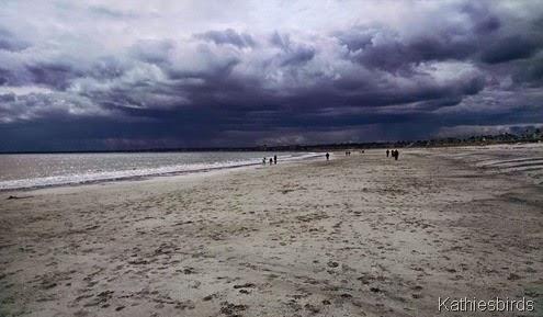 4-26-15 Pine Point beach