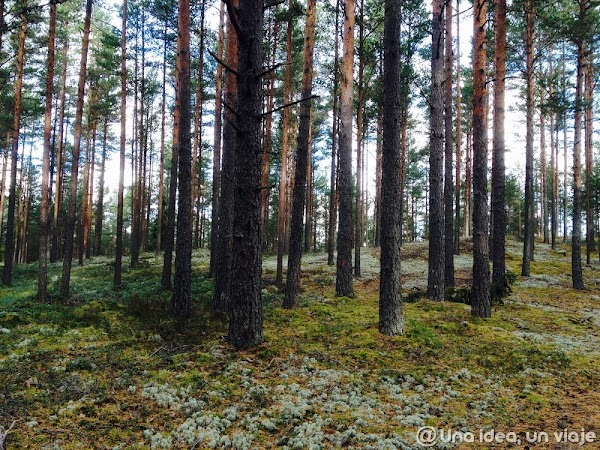 recorrido-paises-balticos-top-3-parques-naturales-unaideaunviaje.com-34.jpg