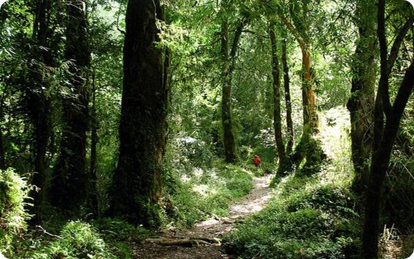 parque-nacional-los-alerces-flora_thumb[2]
