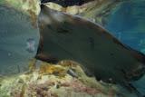 """Het aquarium van Alesund, een """"beetje"""" bewogen."""