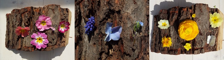 petals on tree bark