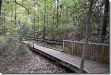 Boardwalk Path-2