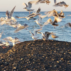 Seabirds by Gene Richardson - Instagram & Mobile Android