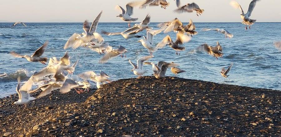 Seabirds by Gene Richardson - Instagram & Mobile Android