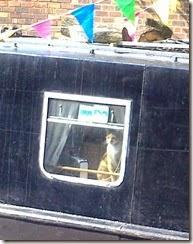2 pussycat in window