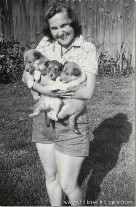 Bruce Pups